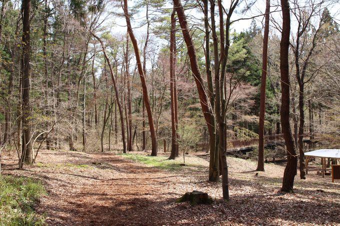 森林浴はマイナスイオンとフィトンチッドが免疫力を高めます!!