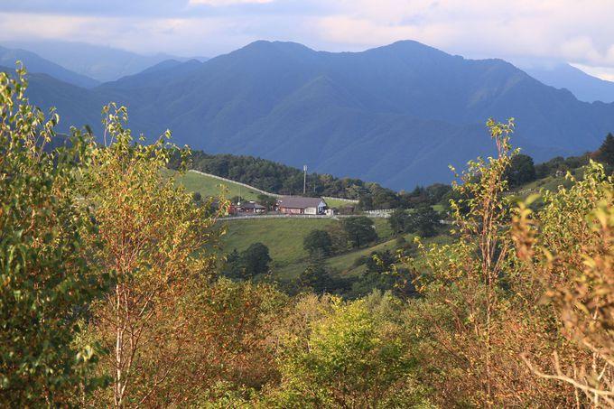 ハイキングコースが整備されている横根高原はハイキング初心者にも優しい高原です