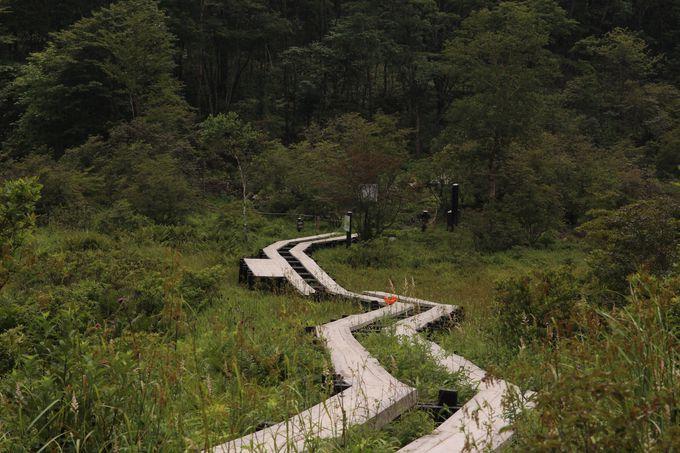 井戸湿原は1万年の歳月をかけた自然の宝物!約400種以上の湿原植物や亜高山植物が見られる