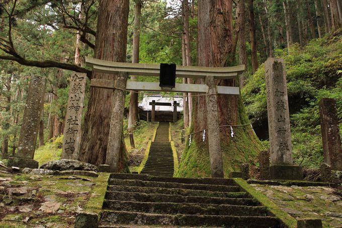 樹齢500年を超える杉に守られた本殿!御祭神は五穀守護武勇の神