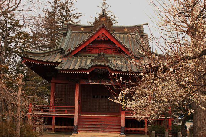 全国最大級の規模を誇った古代「常陸国分寺」