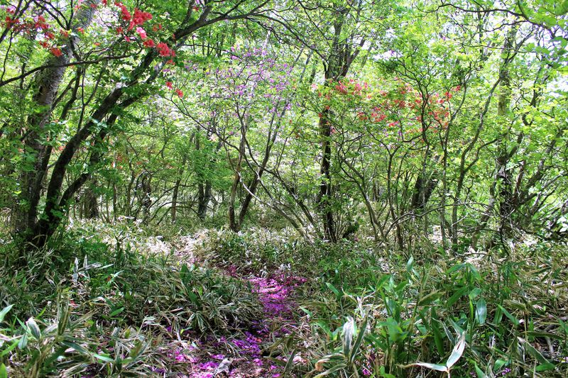 群馬「赤城山頂〜大沼・小沼・覚満淵」四季折々の魅力に迫る