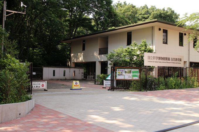 敷地は約20万平方メートル!付属自然教育園は上野の国立科学博物館の付属施設