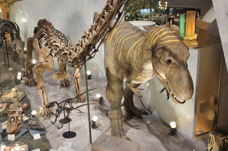 46億年の地球から始まる!群馬県立自然史博物館で、群馬の自然史を学ぼう