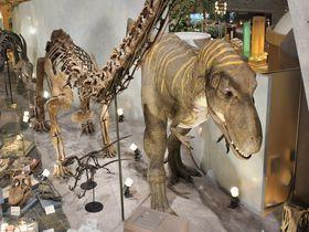 46億年の地球から始まる!群馬県立自然史博物館で、群馬の自然史を学ぼう|群馬県|トラベルjp<たびねす>