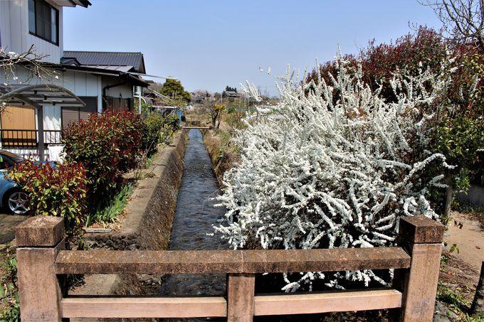 田園風景に流れる雄川堰!取水口まで続く雄川堰遊歩道
