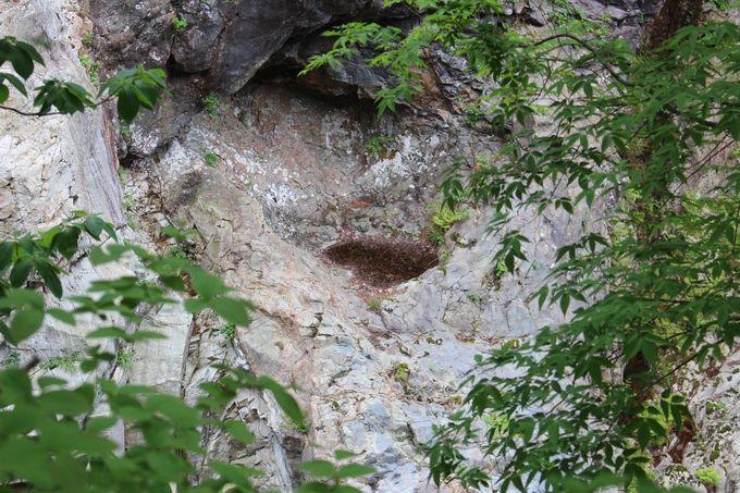 昔の川底沿いに作られた自然探究路!「竪琴の滝」や「かめ穴」も必見