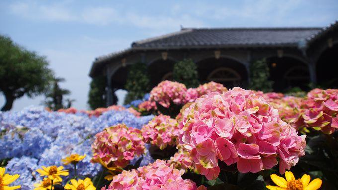 アジサイ以外の花も楽しめる!「グラバー園」