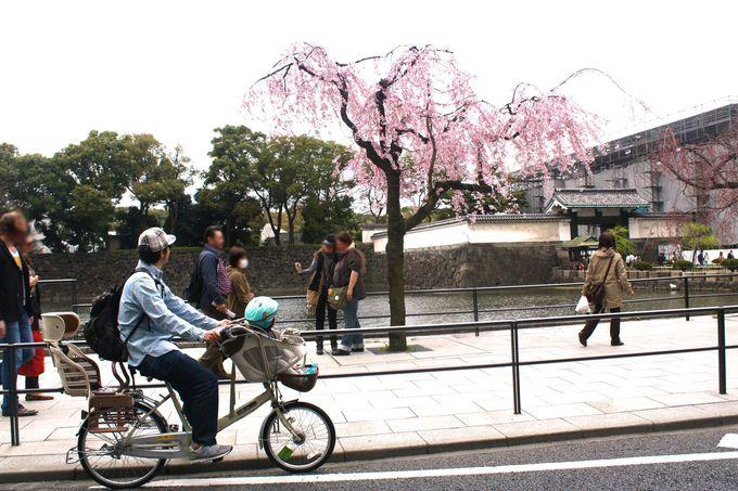 大人も興奮!皇居前の車道を走れる「パレスサイクリング」