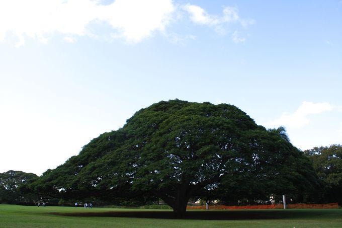 この木なんの木と写真をパシャリ!「モアナルア・ガーデンパーク」