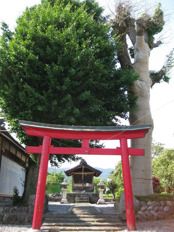 黒田官兵衛の息子・松寿丸を匿った五明稲荷神社