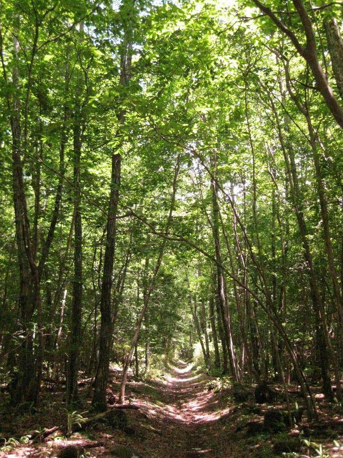 次は森林浴!「溶岩台地」を歩く