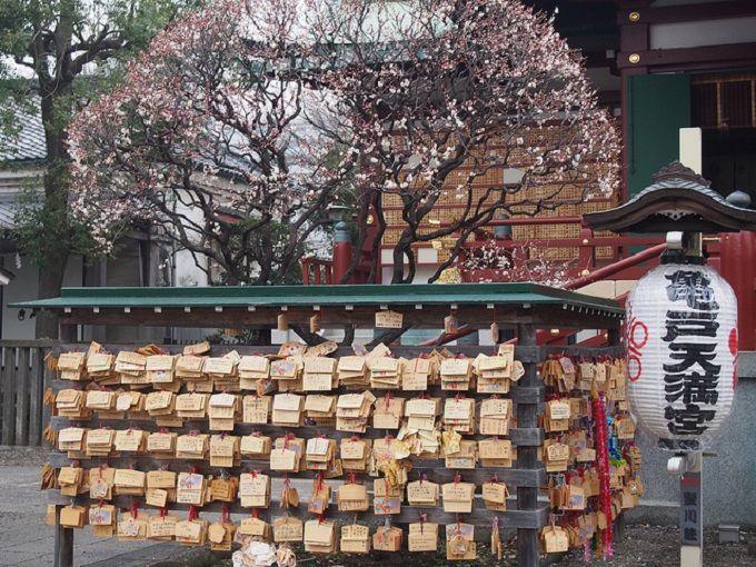 東京・亀戸天神社で学問の神様菅原道真も愛した梅を愛でよう!