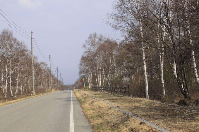 八千穂高原には白樺群生地以外の観光スポットも!