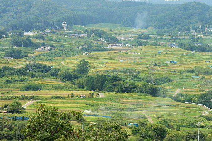 斜面いっぱいに広がる棚田の景観