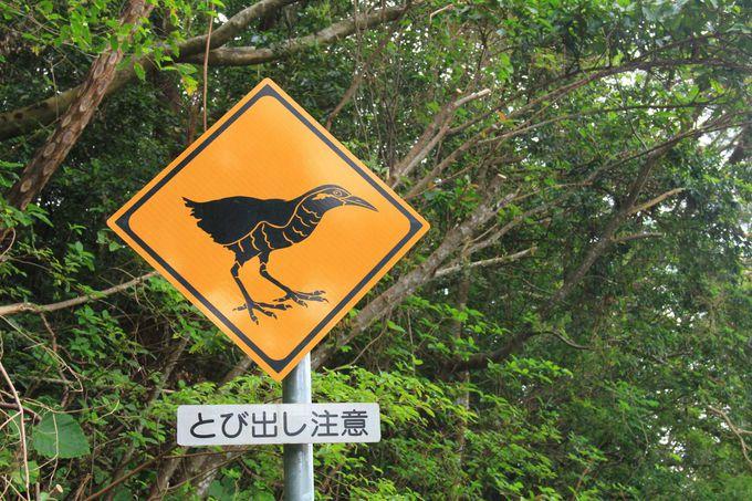 道路標識「ヤンバルクイナ」とび出し注意!
