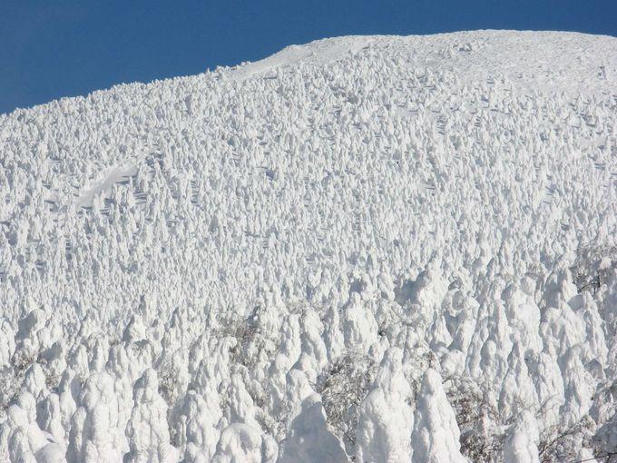 一帯に広がる樹氷原