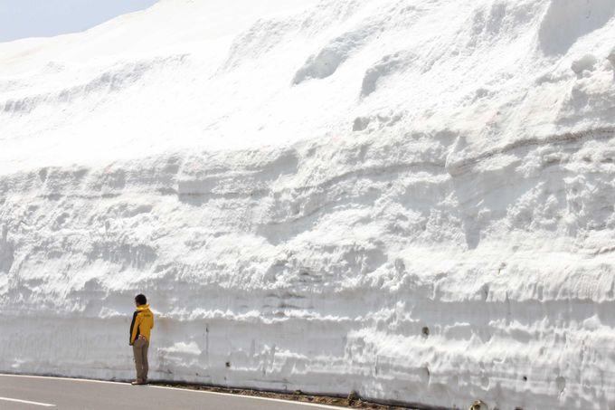 圧巻!雪の壁の高さを歩いて体感