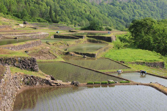 地元の方々の手で守られている石垣田の景観