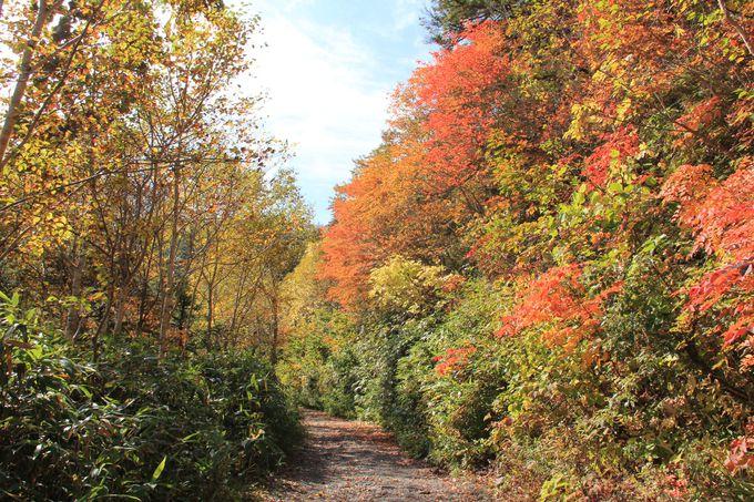 森林浴を楽しみながらの紅葉ハイキング