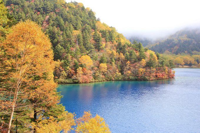 鮮やかなコバルトブルーの水面と紅葉のコントラストの絶景