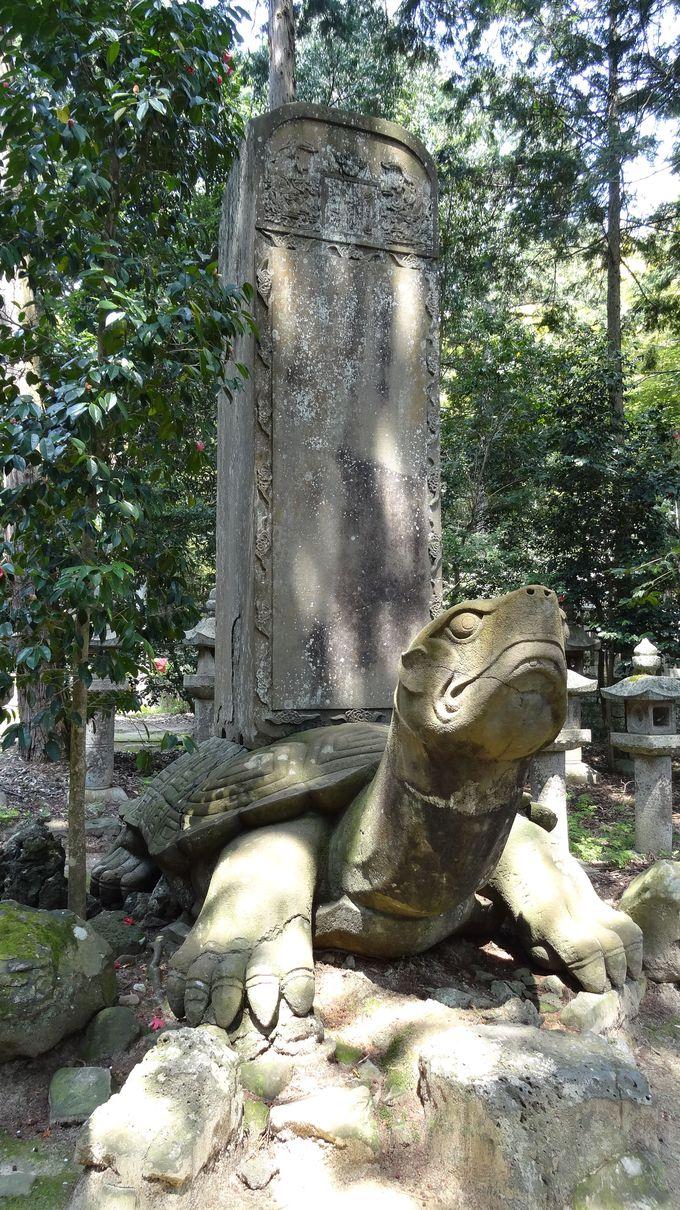 夜になると「母岩恋し・・」と歩き回る伝説の大亀!