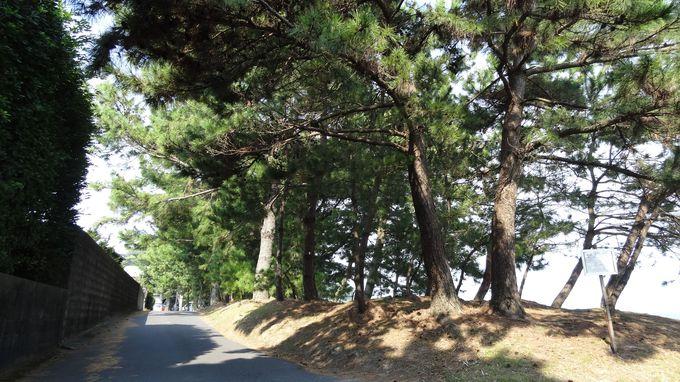 今和泉の隼人松原を歩く