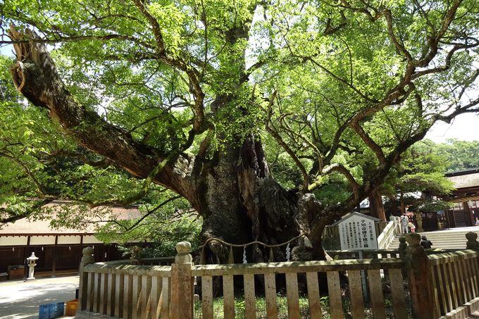 日本最古の原始林楠群に癒される空間〜