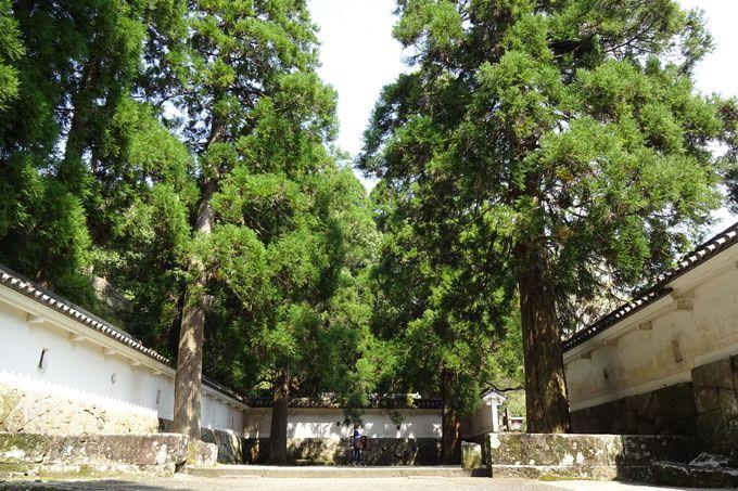 しあわせ杉のパワーをもらいに、伊東氏の居城飫肥城へ!
