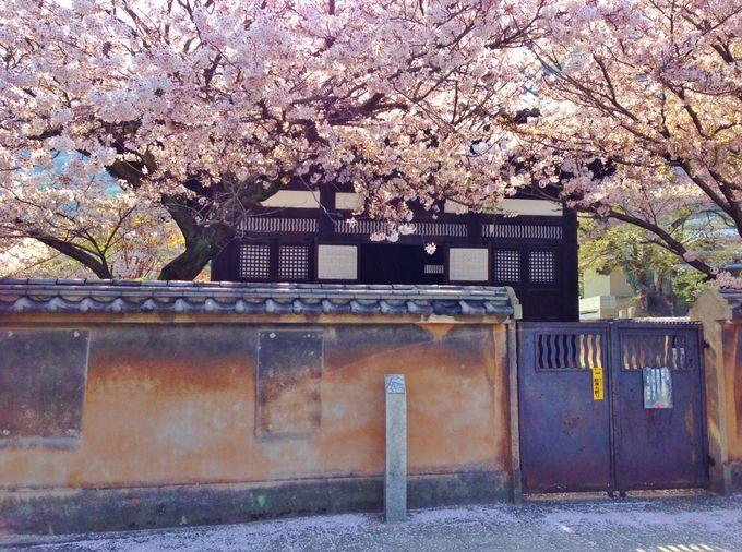 釈迦堂は鞆の浦の財力の象徴!桜吹雪の釈迦堂前