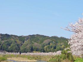 中国やまなみ街道〜斐伊川沿いに広がる桜絵巻や神話の舞台へ