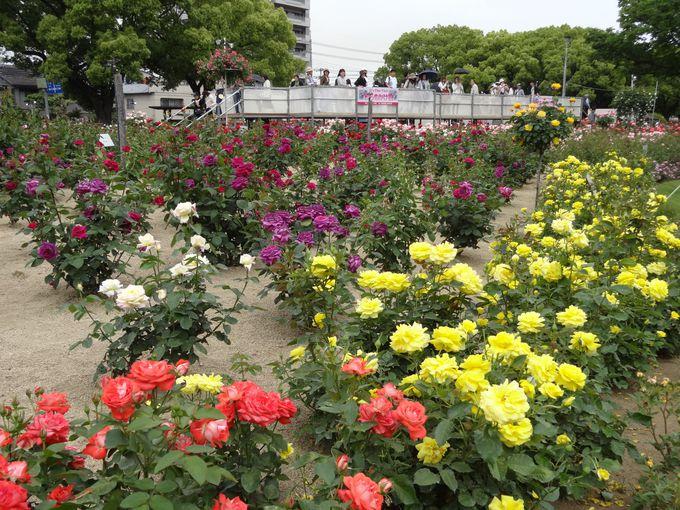 ばら祭りも開催!バラの香り漂う城下町「福山(広島)」