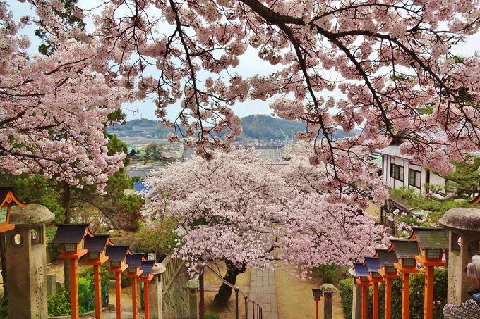 楽しい旅は脚の健康から「西國寺」で健脚祈願を