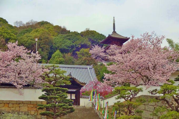 文化人に愛された西國寺には、素晴らしい襖絵と画家の墓も