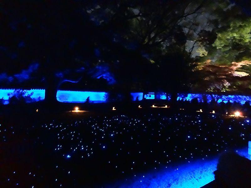 色と光で楽しむ京都!秋の夜長の青蓮院門跡