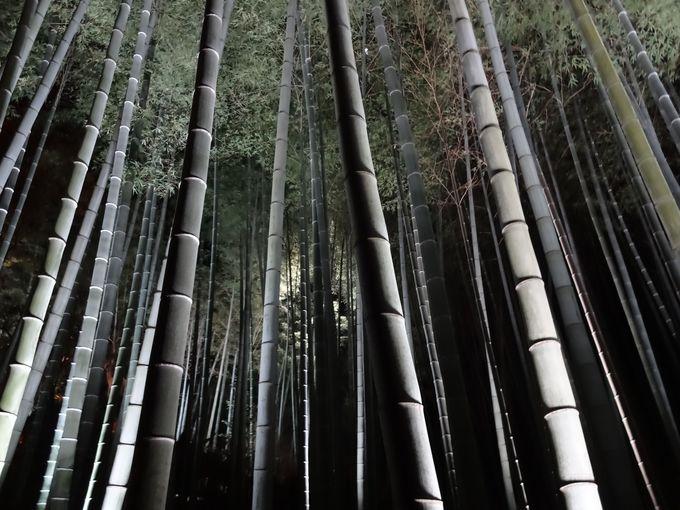 息を飲む竹林!その繊細な光と影。
