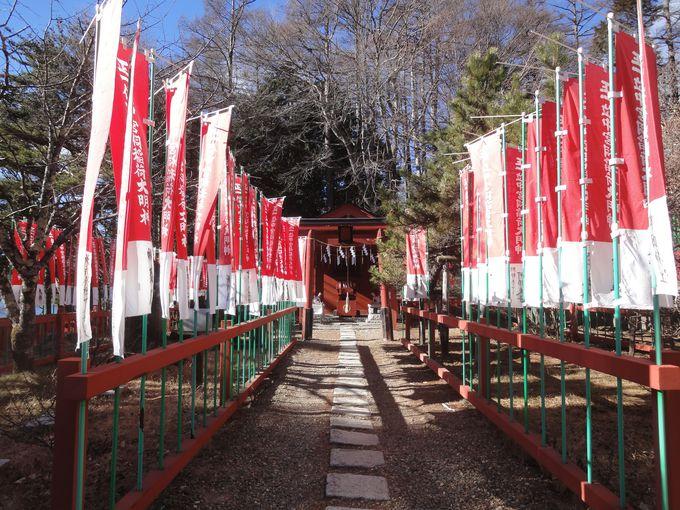 「中宮祠稲荷神社」とそのご神木もすごい!