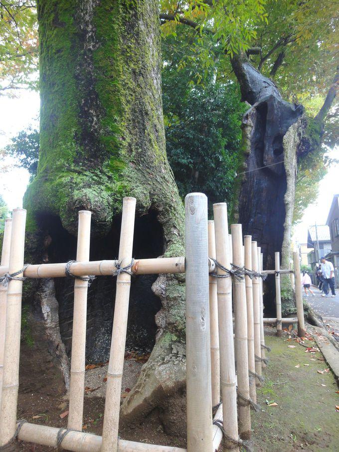 神秘的!氷川参道の樹木