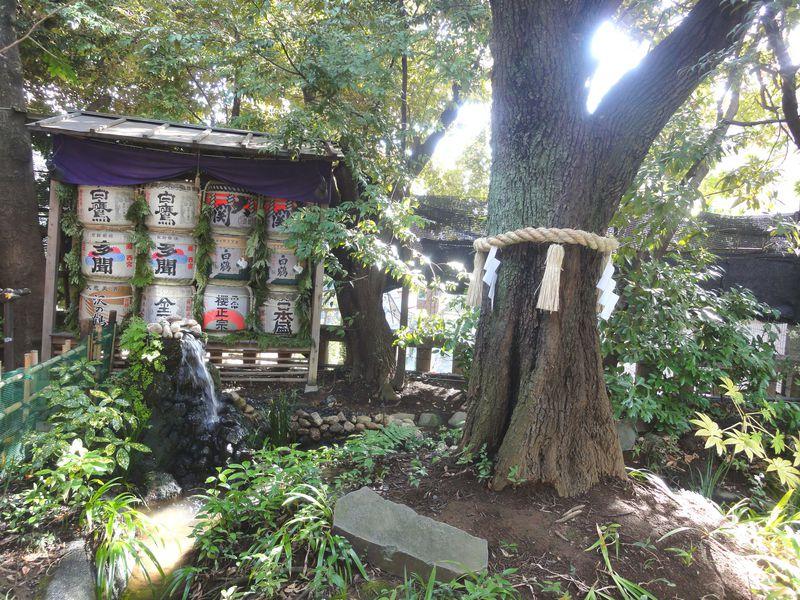 東京大神宮のご神木を待ち受けにすると?