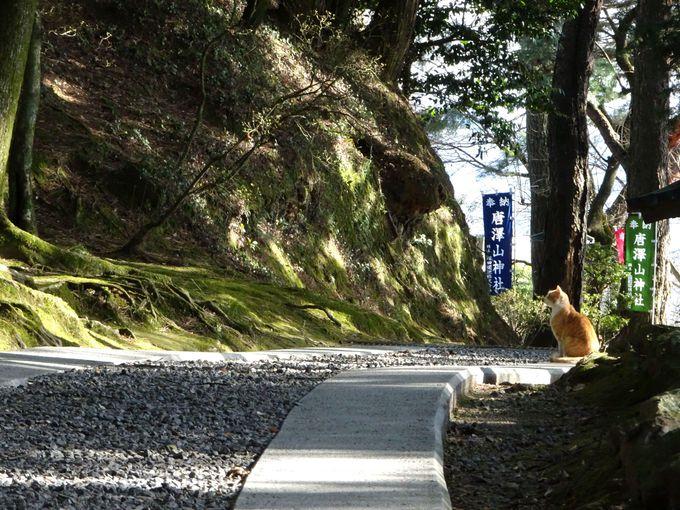 魅力3:山の上の神社だからこそ!境内がマイナスイオンたっぷりで癒される