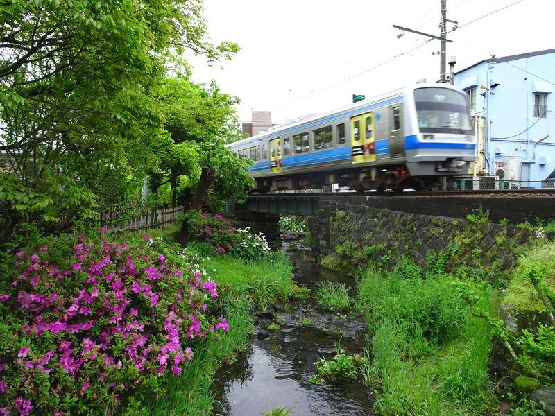 三島の名所「源兵衛川×いずっぱこ」を撮影するならココ!川沿いのカフェも人気
