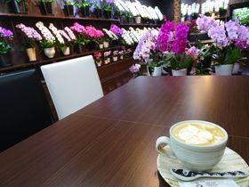 高田純次も訪れた東京・小石川の新名所!胡蝶蘭カフェ「らんや小石川」|東京都|トラベルjp<たびねす>