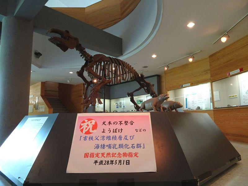 ようばけ、パレオパラドキシアも!秩父「おがの化石館」で古代にタイムトリップ