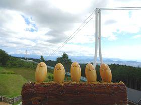 日本一の大吊橋!静岡「三島スカイウォーク」を120%楽しむには?|静岡県|トラベルjp<たびねす>