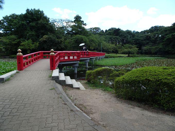 公園のシンボル! 菖蒲池にかかる朱色の八ッ橋
