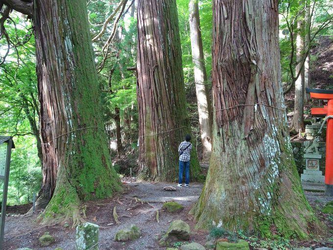 神秘的なパワースポット「杉の群」