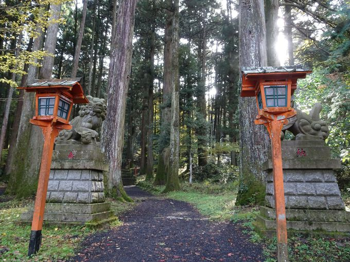 杉の巨木が立ち並ぶ! 神秘的な雰囲気を醸し出す社叢