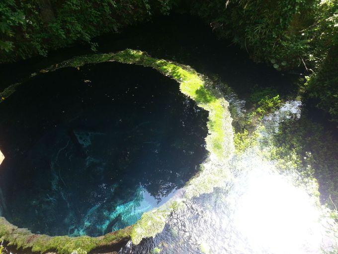 富士山の湧水を体感できる超パワースポット! 清水町「柿田川公園」