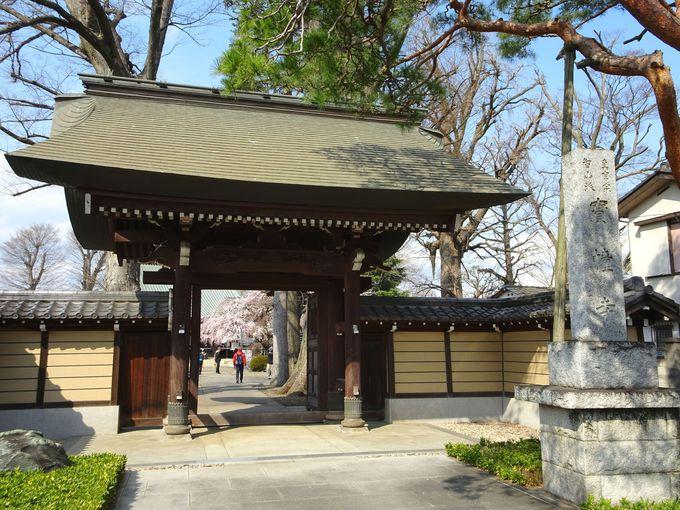 埼玉にもしだれ桜の名所があった! 志木市「宝幢寺」