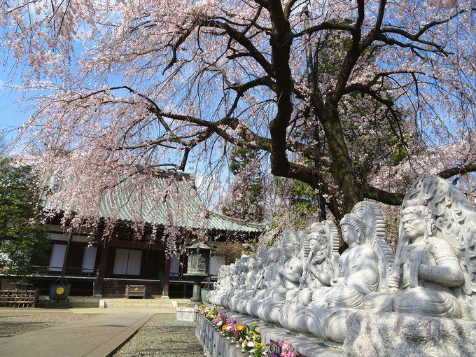 桜の下にご鎮座する「十三の仏さま」にも注目!